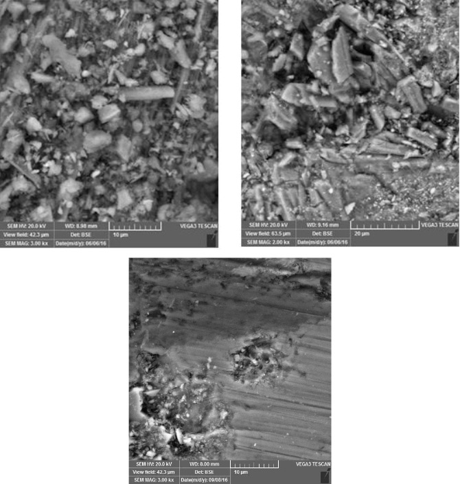 SEM image of the surface of the sample.