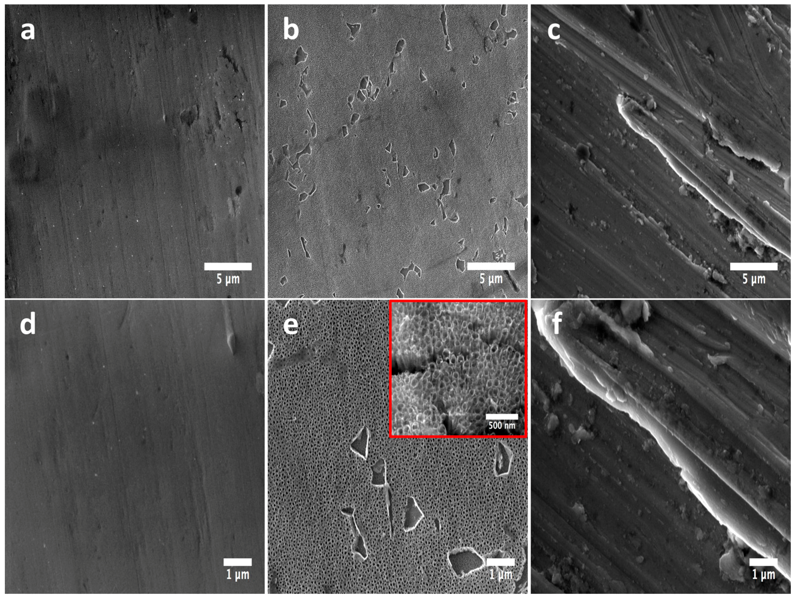 FE-SEM micrographs illustrating the surface morphology of the experimental materials.